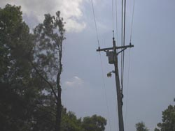 Trees trimmed along the sides of electrical lines are called sidewalls